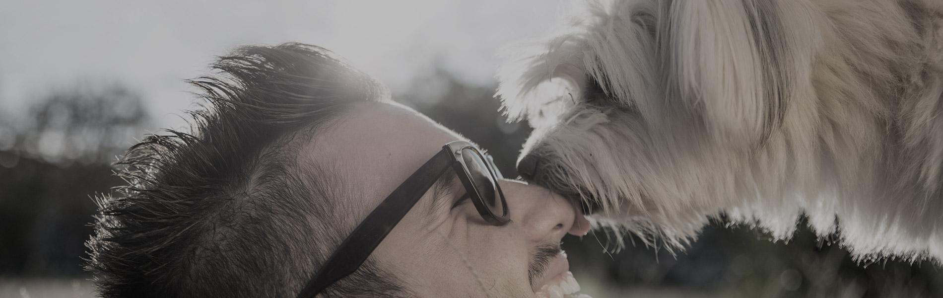 Getreidefreies halbfeuchtes Futter für den Hund