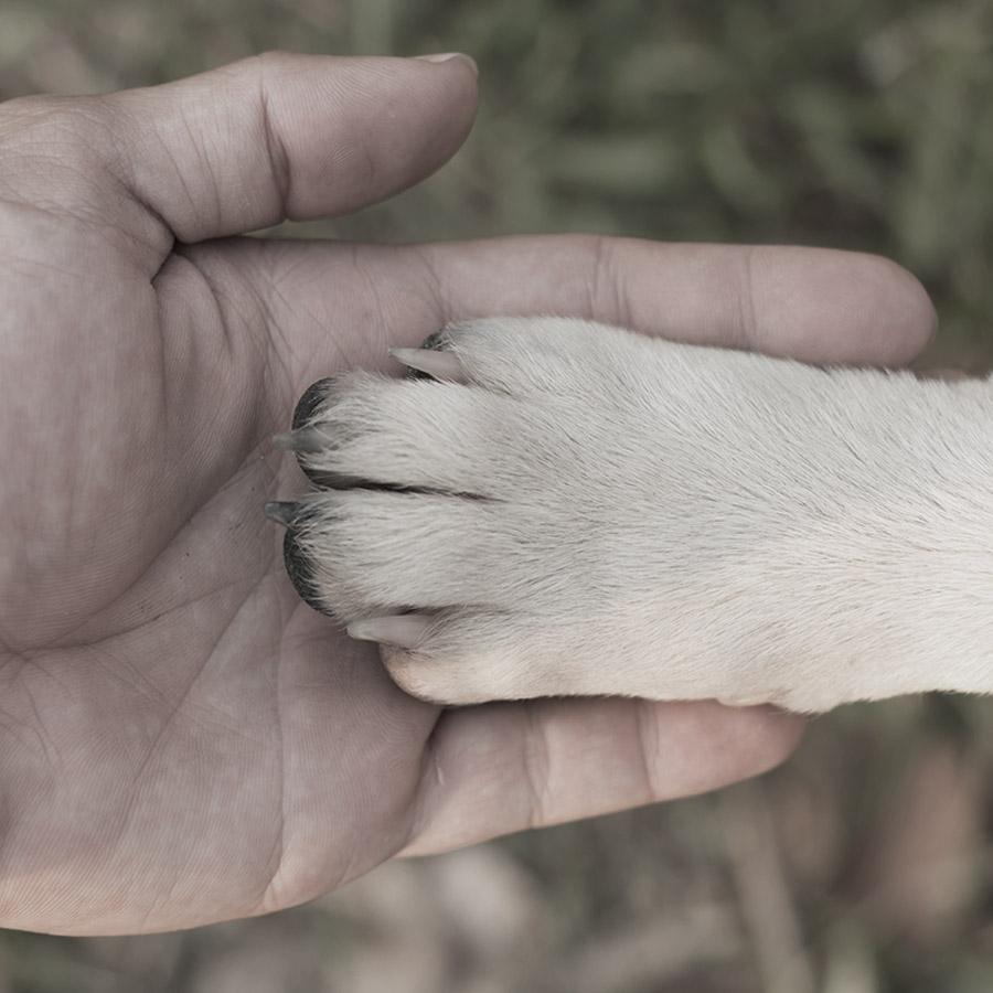 Primum Hundefutter - gesund, frisch und lecker